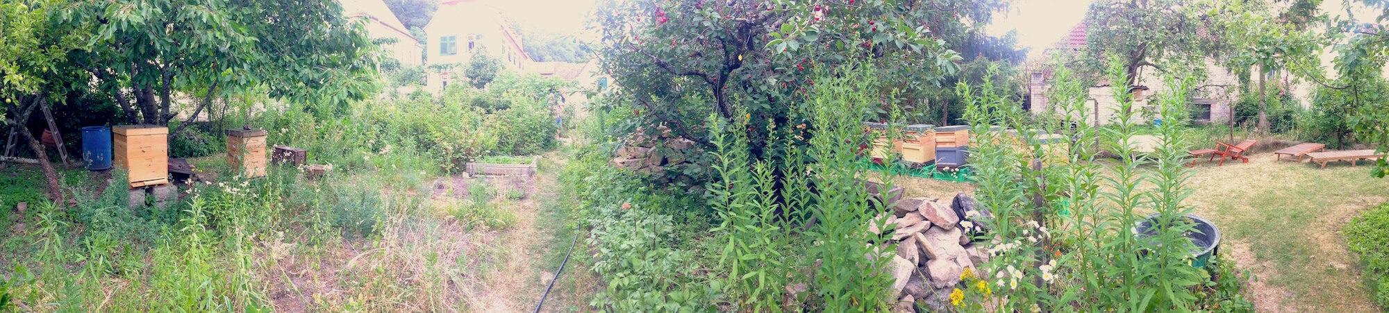 paradiesischer Garten in der Pfalz, mit Bienen, Erntemöglichkeiten, Lebensraum