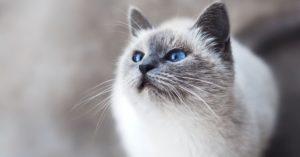 Katzenstreu entsorgen – Oder gleich eine dieser Alternativen nutzen